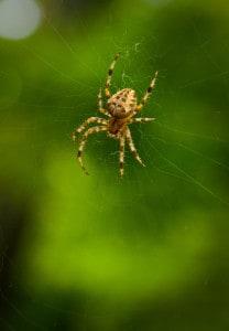 Preventive Pest Control Frisco TX