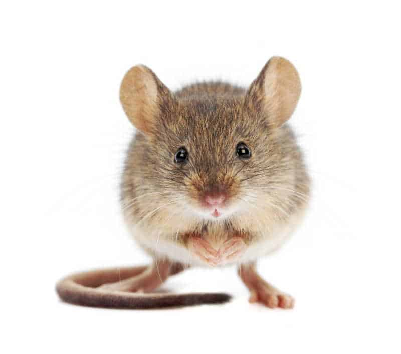 Rodent Control in TX